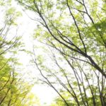 komazawa-park-running