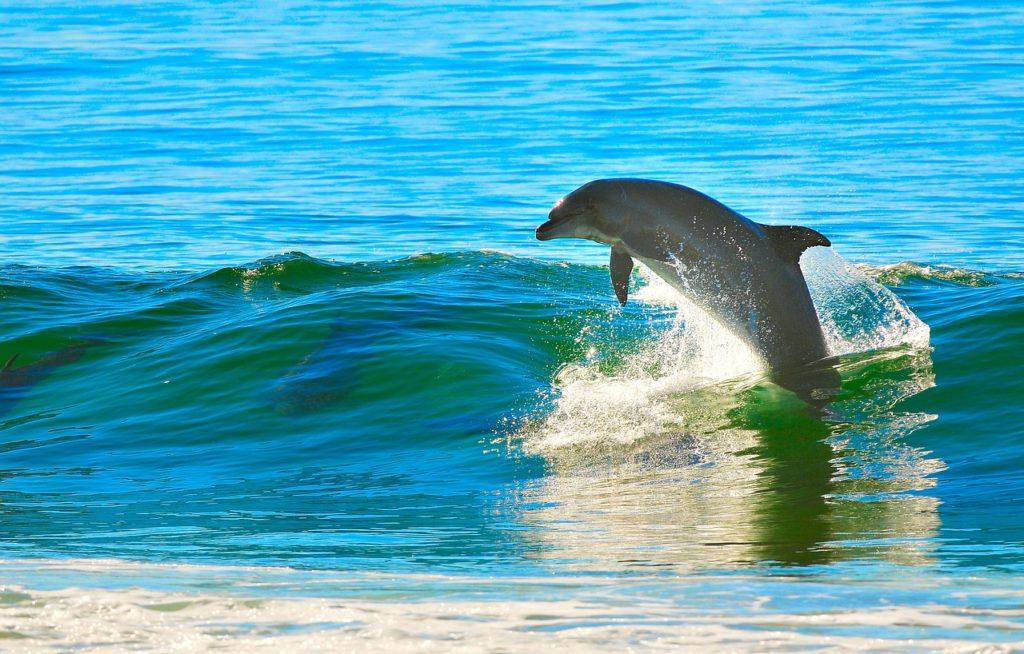 tabizaru-hawaii-dolphin